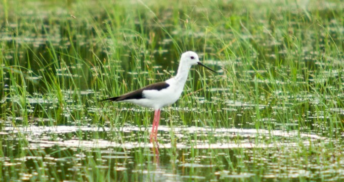 bird-watching in sri lanka