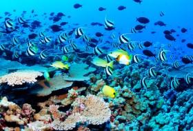 scuba-diving-srilanka