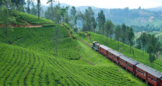 sri-lanka-explorer-train-through-tea-country