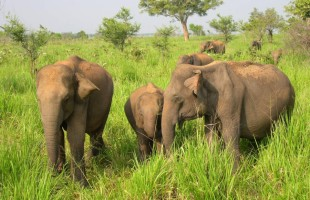 Kaudulla national Park Sri Lanka