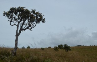 Horton Plains