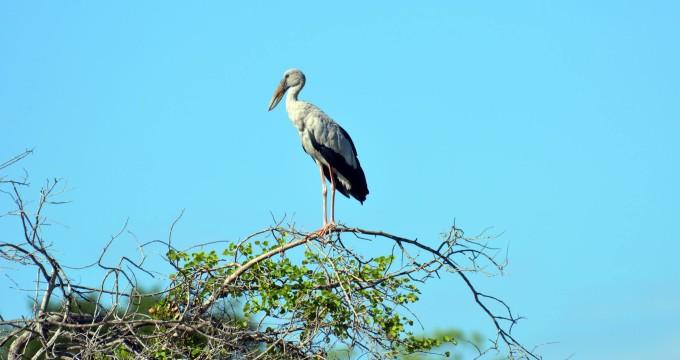 Birds Sri Lanka