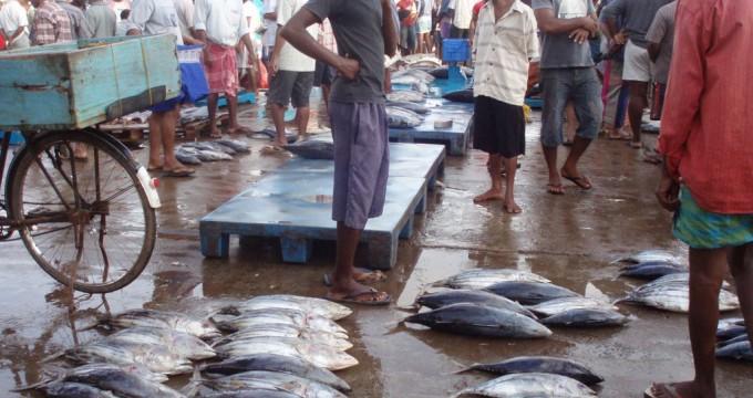 Atuthgama Fish maket town in sri lanka